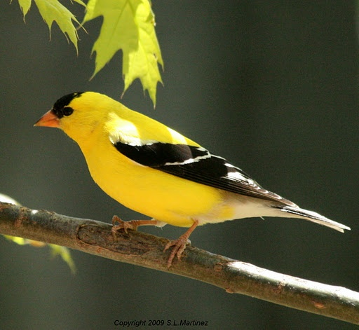 1000+ Images About My Backyard Feeder On Pinterest