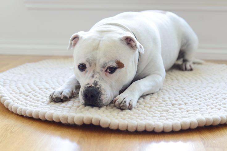 Fineste Nala elsker teppet sitt!