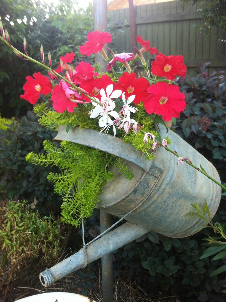 Watering can. Planter. Toowoomba Australia