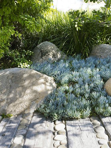 love the mixture of river rock and railroad wood tracks to make a path through succulents and boulders
