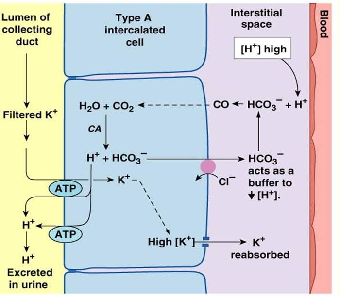 chloride and sodium relationship