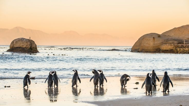 The Most Unique Experiences You Can Have in Cape Town