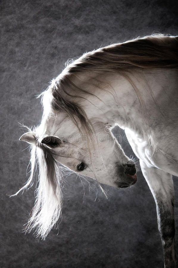 White horse on the dark