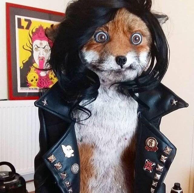 This Punk Rock Taxidermy Fox