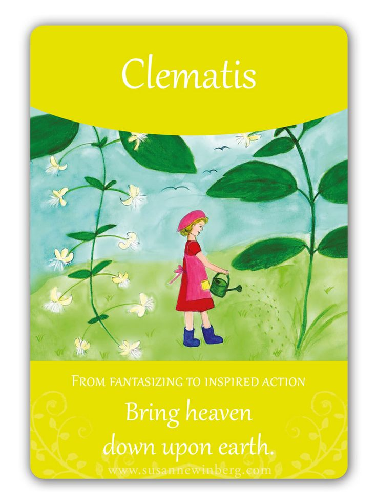 Clematis - Bach Flower Oracle Card by Susanne Winberg. Message: Bring heaven down upon earth.