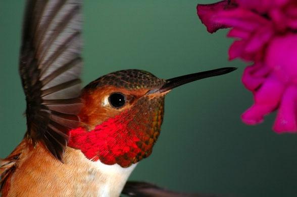 Whip Up Some Hummingbird Food