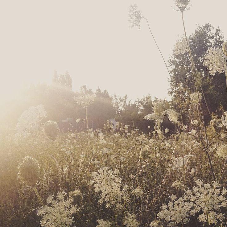 Rocco & patrick Salvadori   #nature #naturelover #midsummer #light...