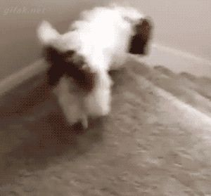 Gifak.net. gifak-net. Gifs. Animated gif. Lol gifs. Funny gifs. Cat gifs. New gifs