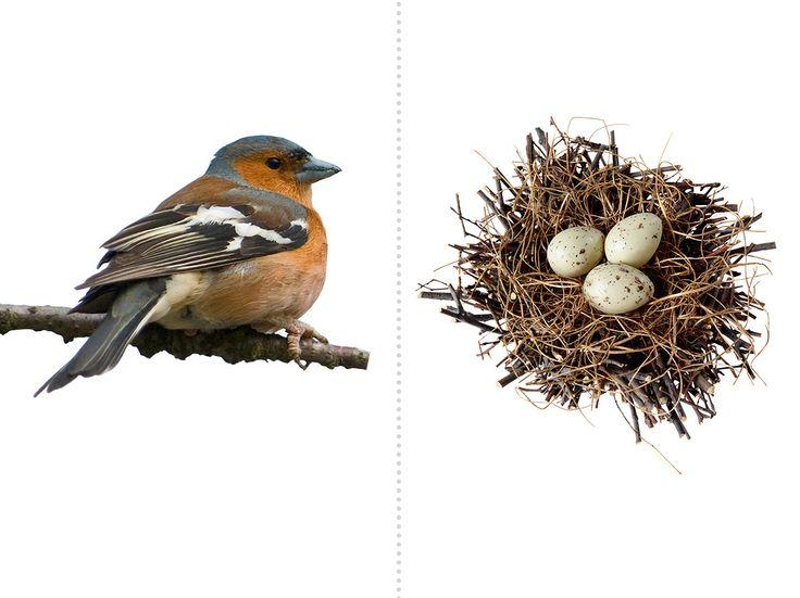 eitjes + vogel