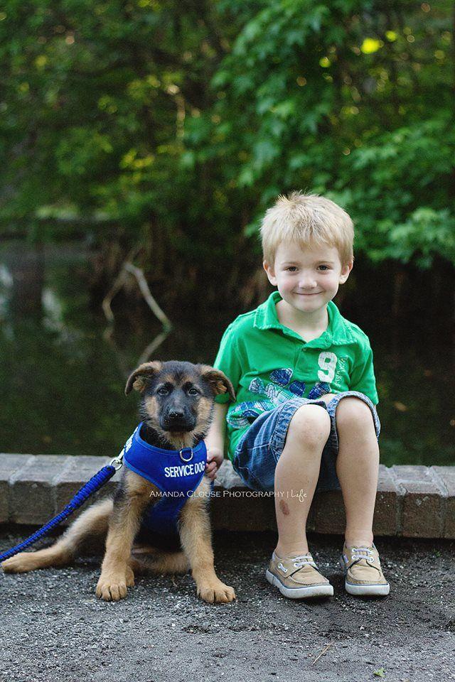Best Service Dogs For Epilepsy