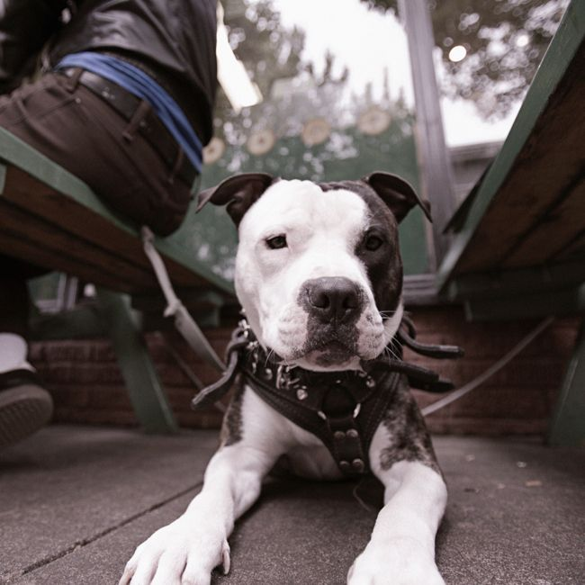 Breed Specific Legislation A Dog S Dinner