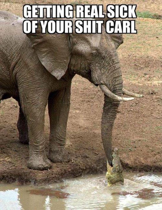 Getting real sick of your shit, Carl.