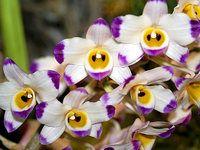 Praktické rady pro pěstování orchidejí doma