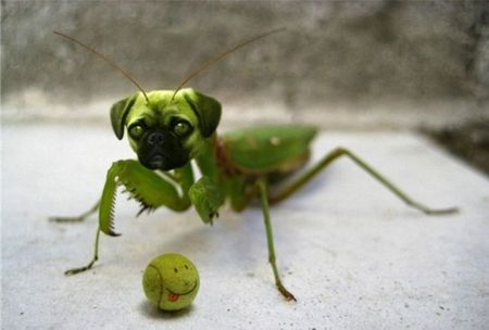 Photoshopped Animal Hybrids Morphed Funny Green
