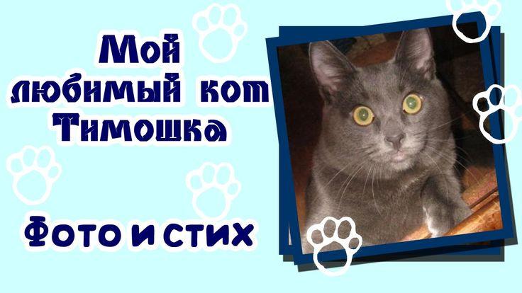 Забавный кот Авторский стих и фото