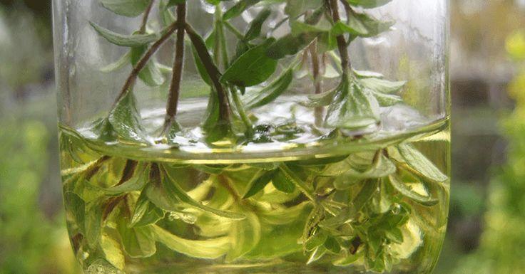 Tento esenciálny olej usmrtil 98% buniek rakoviny prsníka v priebehu 72 hodín