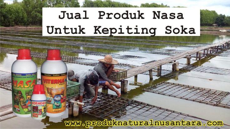 Produk Nasa untuk Kepiting. Jual Produk Nasas untuk kepiting. Produk Nasa Untuk Budidaya Kepiting Soka. Produk Nasa Untuk Kepiting Soka Hub 0822 2071 4181