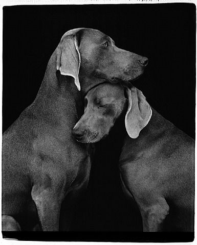 """Friends""  							  						  					  				  			    			  				  					  						  							  								  							  							  								ARTIST:   							  							  								William Wegman"