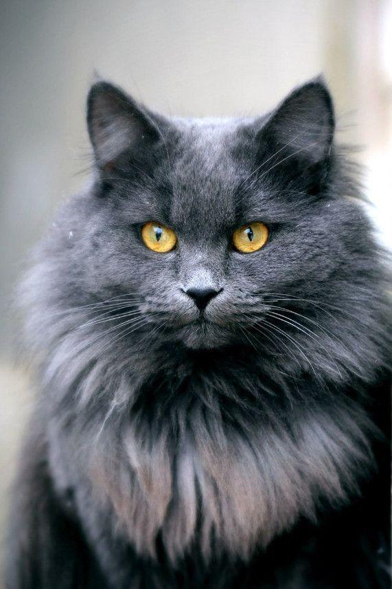 Fancy Persian Cat Names
