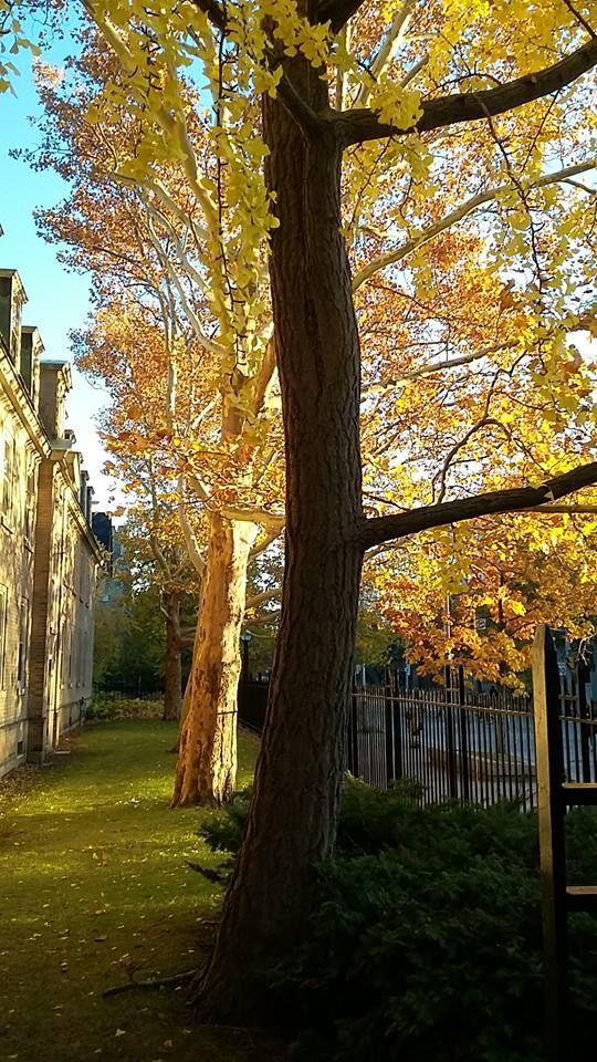 St George, University of Toronto