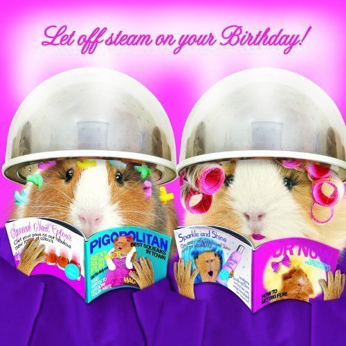 Funny Guinea Pig Birthday Card Let Off Steam! Hairdressers Greeting Card Hairdo