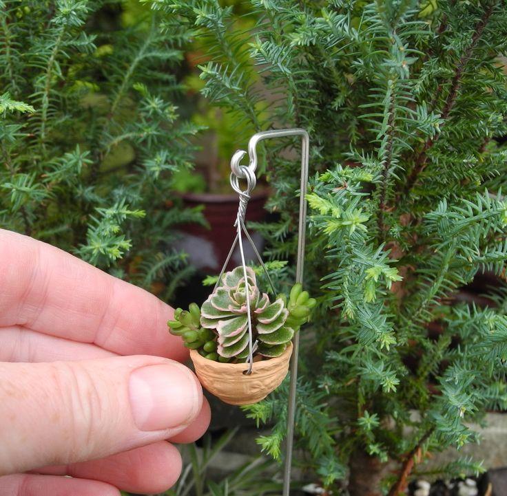 Tiny Hanging Sedum Planter for Your Miniature Garden