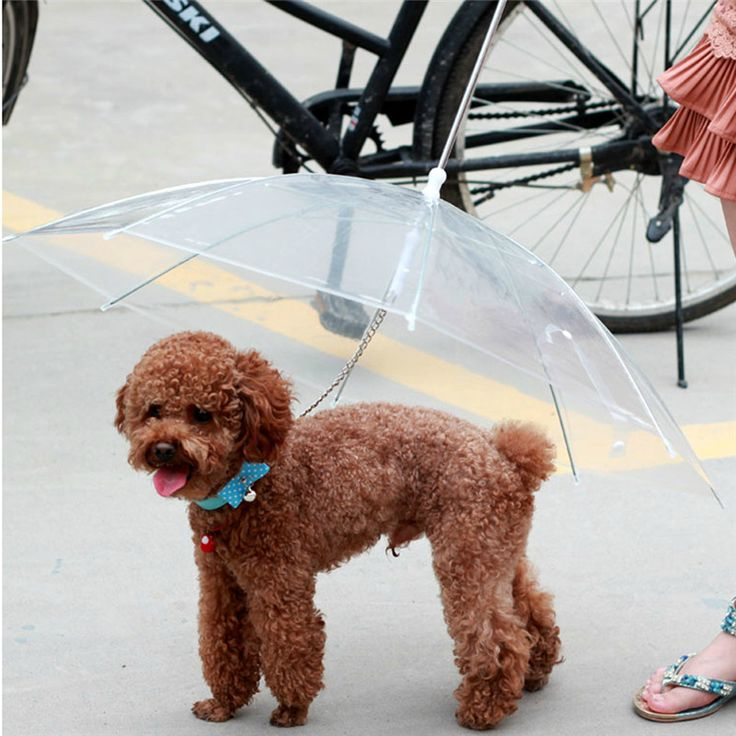 Like and Share if you want this  Diameter 69CM Dry Comfortable Glee Pets Umbrella   Tag a friend who would love this!   FREE Shipping Worldwide   Buy one here---> https://gleepaw.com/diameter-69cm-dry-comfortable-glee-pets-umbrella/