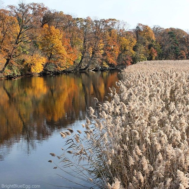 Beautiful Fall on the river