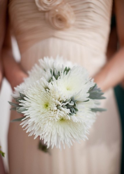 best chrysanthemum wedding images on, Beautiful flower