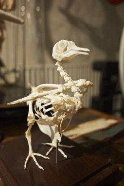 Bones #TMOtrendevent