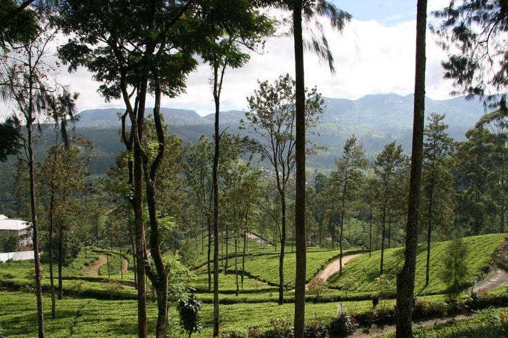 Omgeving Nuwara Eliya