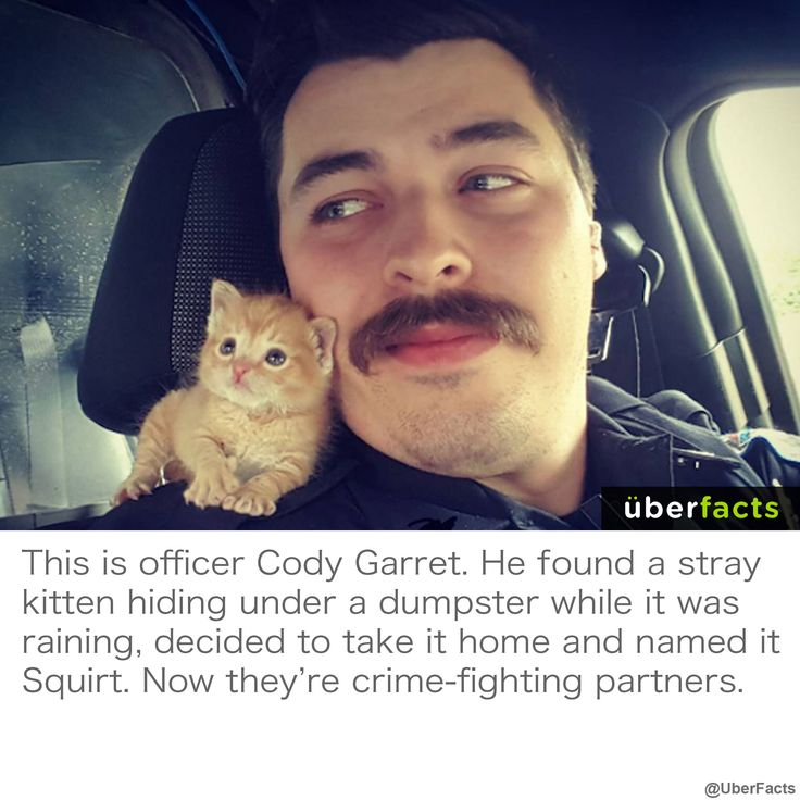 Cute : Uberfacts : Police Officer Rescued Kitten