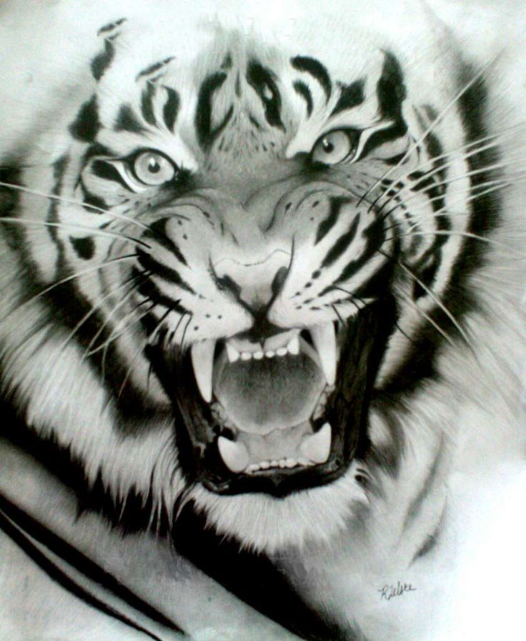 44 best Roaring Tiger Head Tattoo Drawing images on ...
