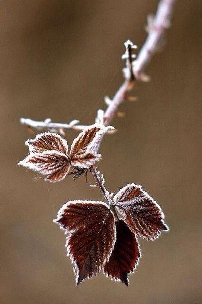 Moment's #Fotografie #Frost #Natur #Blatt