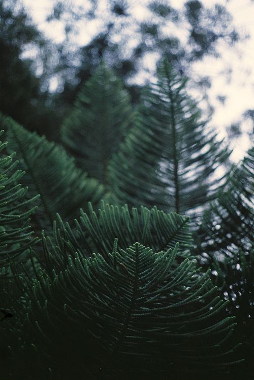 I truly miss the evergreen trees and their wonderful smells.  Not the pitch, though.  Nor the spiders.  Still, trees...