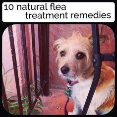 10 natural flea treatment remedies