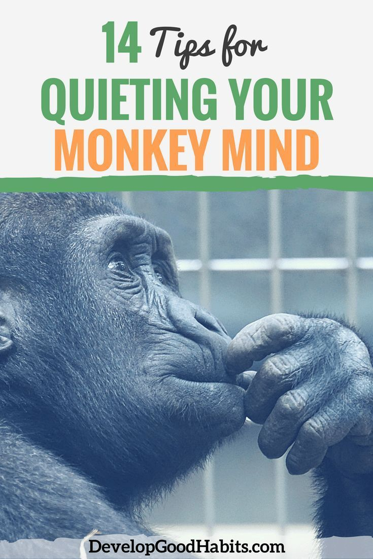 """Have you had success in quieting the monkeys in your mind? Get 14 tips to ease the anxiety and stress brought on by your """"Monkey Brain"""" and calm all those riotous monkeys that can make your day a living hell."""