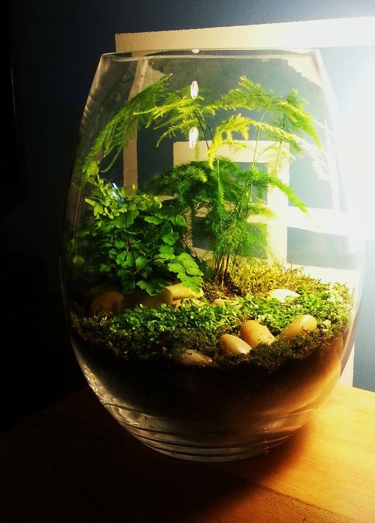 Forest moss, asparagus fern, maidenhair fern, baby's tears ground cover. I like the rocks and the tall asparagus fern.