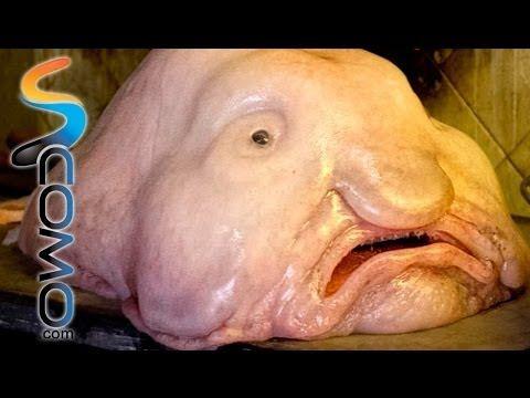 Los 10 animales mas feos del mundo - top 10 World's Ugliest Animal - YouTube