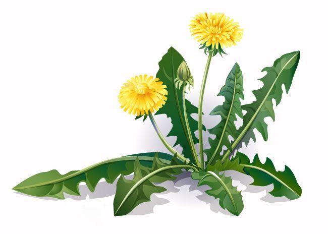 Удивительная польза растений