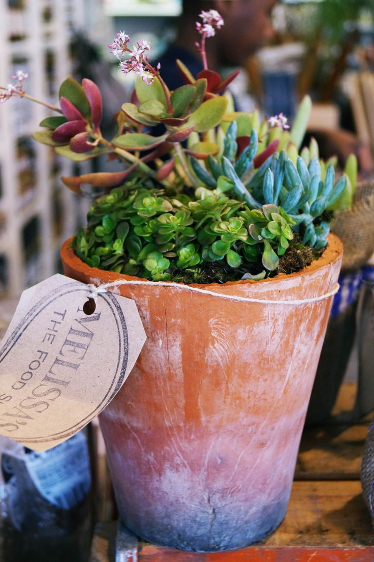 Pretty Potted Plants at Melissa's... #fabgiftidea