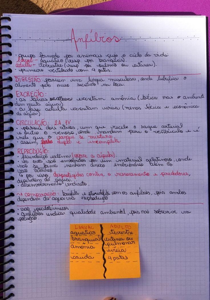 Resumo de Biologia : Anfíbios