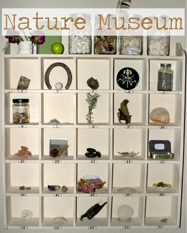 Create a nature museum to house all of your natural treasures...