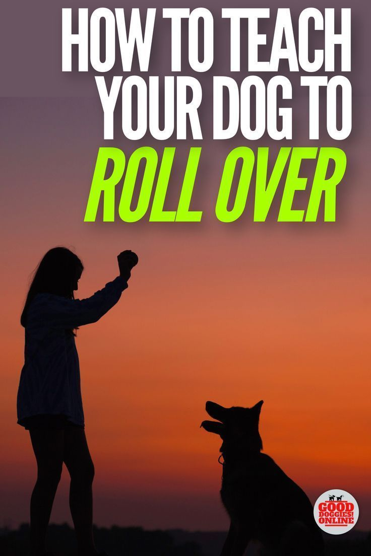 How To Teach Your Dog To Roll Over Dog Training Training Your
