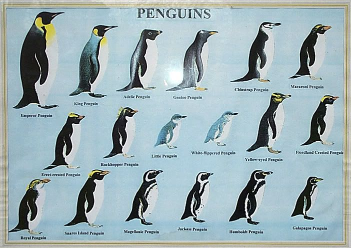 graph of penguins | Penguin Types
