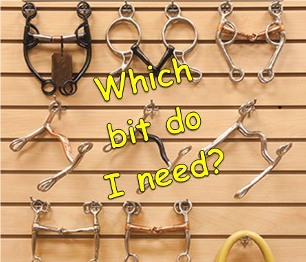 BITS, BITS, BITS! Check out this in-depth tool BITOLOGY to help horse owners learn more about which bit is right for them.