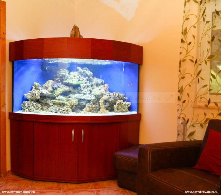 600 liter reef tank   600 literes tengeri akvárium