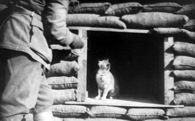 Ensconced in an opening in a sandbagged dugout, a cat, probably a mascot, looks up expectantly at the approach of an unidentified soldier. Gallipoli Peninsula, 1915. Australian War Memorial.