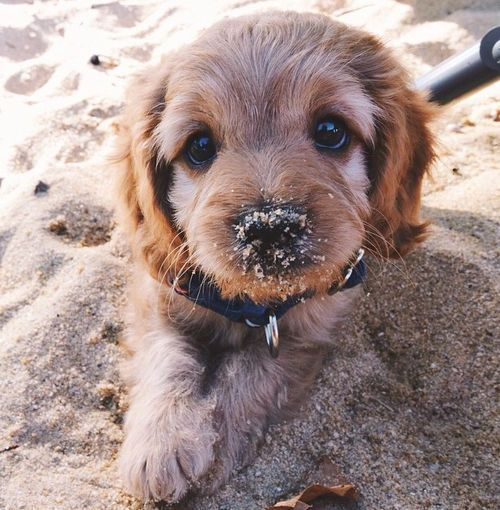 Puppy loves beach