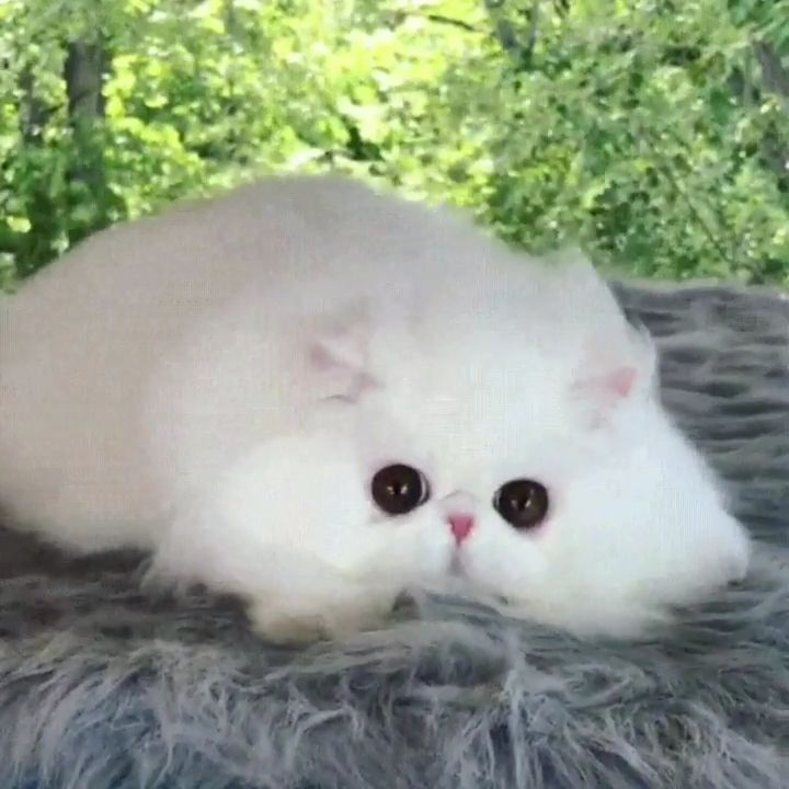 Fluffy cloud with beautiful eyes – Watch More Videos Here 👇👇